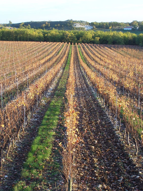 AutumnVineyardTroteligotte